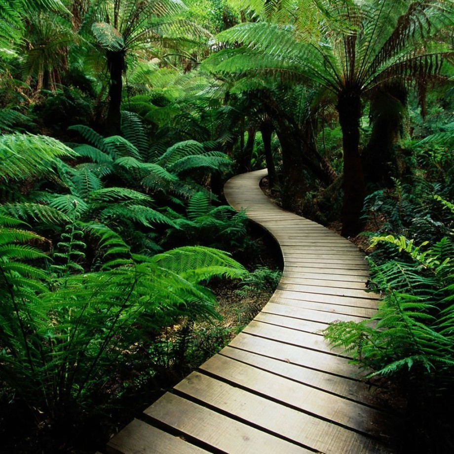 forest-bridge-ipad-wallpaper-ilikewallpaper_com