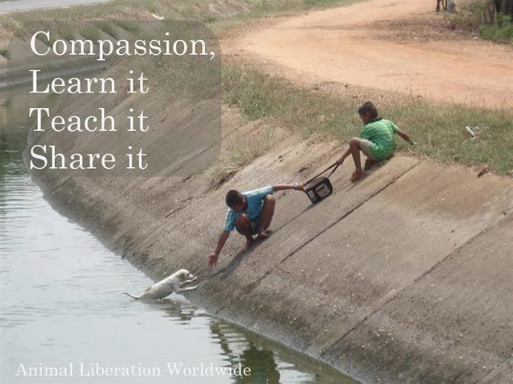 compassion-learn-it