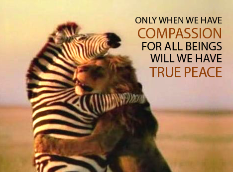 compassion-lion-and-zebra-love-2